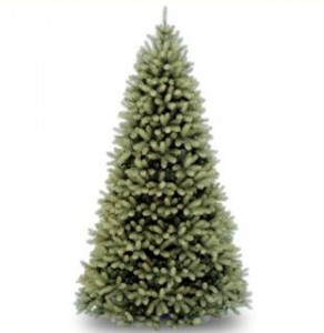 Living Christmas Trees Will Be Arriving In Bethel On December 3. Proceeds  From The Sale Will Benefit TWC.